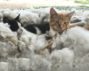 fleece-kittens