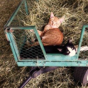 kittens-8-21