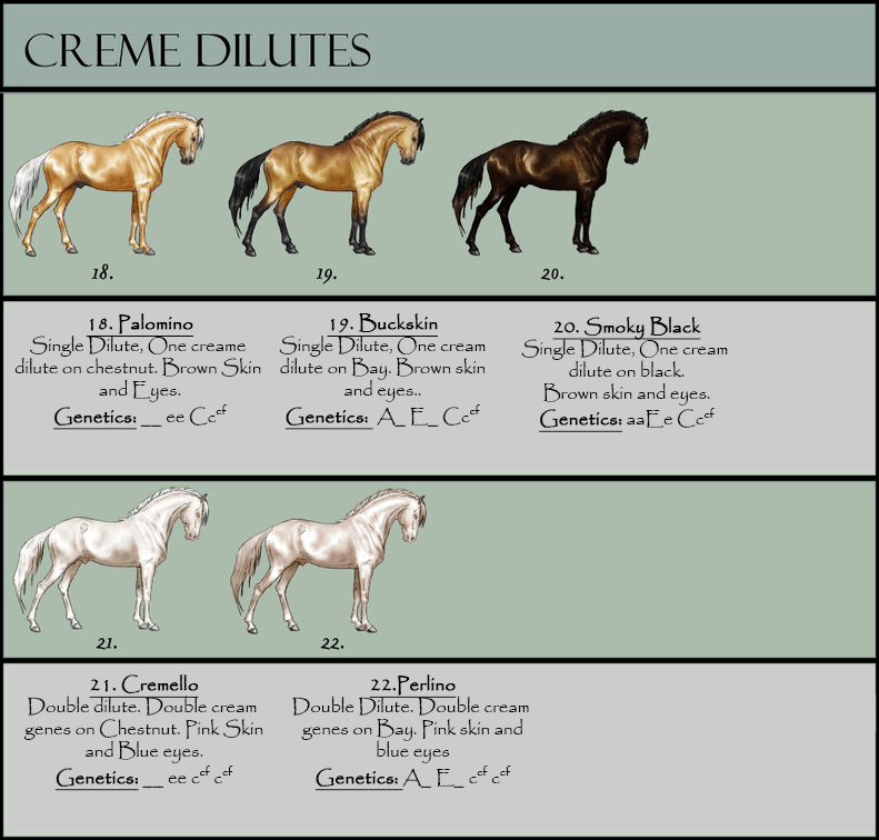 Minecraft Horse Color Chart