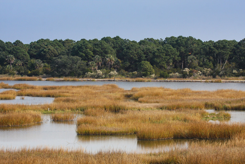 Image result for November in the Lowcountry
