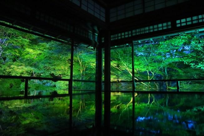 瑠璃光院の新緑