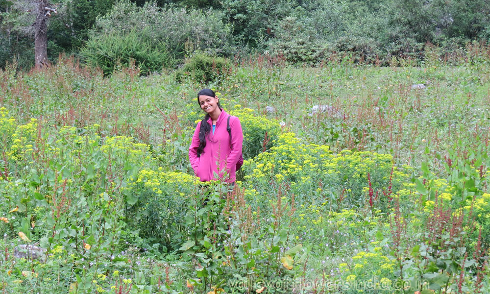 Valley of flowers trek 2014, 6th July to 12th July