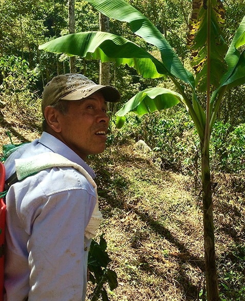 Jesus, the farm manager at La Fragua in Colombia, uses a backpack sprayer to apply actively-aerated compost tea to the coffee trees at La Fragua for the first time.