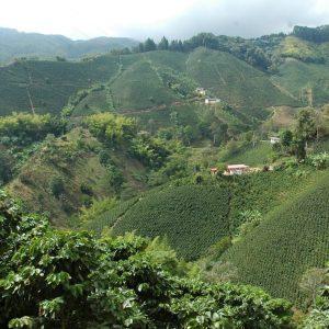 The origin profile explores coffee production in Colombia.