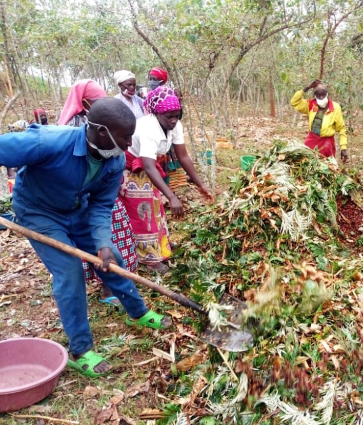 People working on a coffee farm use shovels to add material to a compost pile.