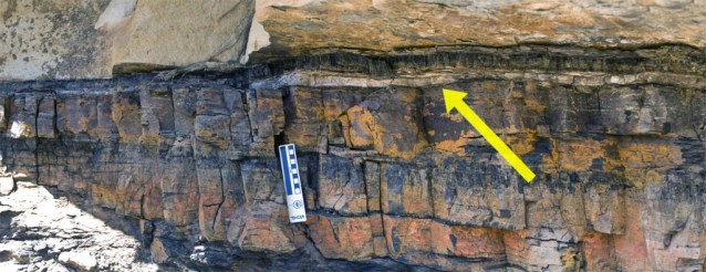 The K-T boundary... mass extinction.... why not a flood with all these sediments?