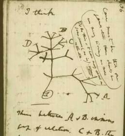Darwin's notebook and his tree of life.