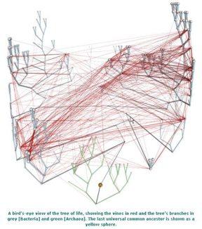 "The network of ""same genes"" found by molecular analysis of genes.  Horizontal gene transfer?  Homoplasty?"