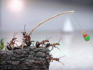 Ants going fishing. Now do you believe?