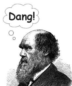 Darwin Dang!