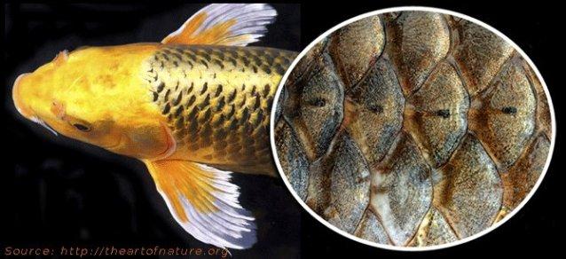 fish-scales