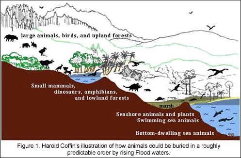 origin-design-sorting-ecological-zones-global-flood