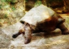 zoo-turtle-blog-creeping