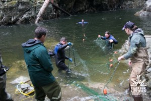 Seymour-Salmon-Society-Fish-Rescue-Sombilon-Photography-54-1024x683
