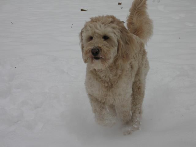 Caya_girl_running_free_snow_2010
