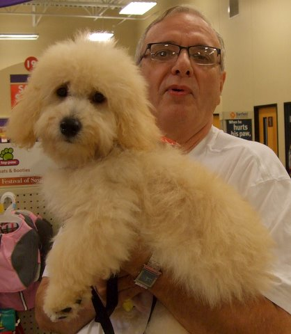 Max_f1b_mini_goldendoodle_with_his_dad_after_grooming