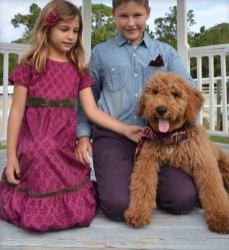 Baxter-the-Goldendoodle
