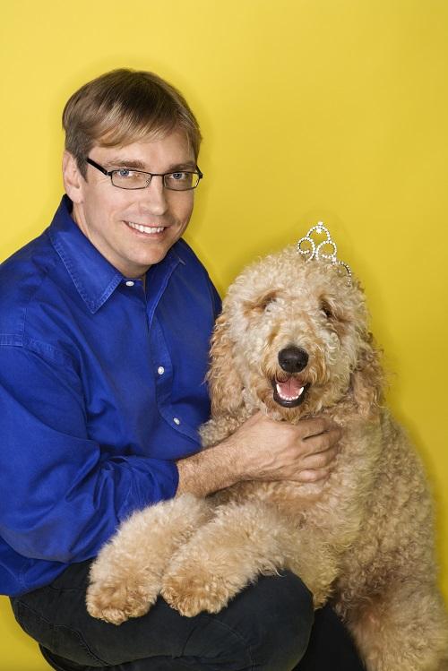 Blueridge Goldendoodles goldendoodle great service dog