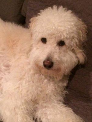 Murphy-Ryan---Dory-x-boomer-pup