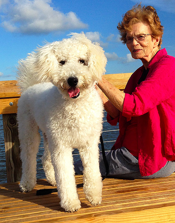 goldendoodle-on-a-boat