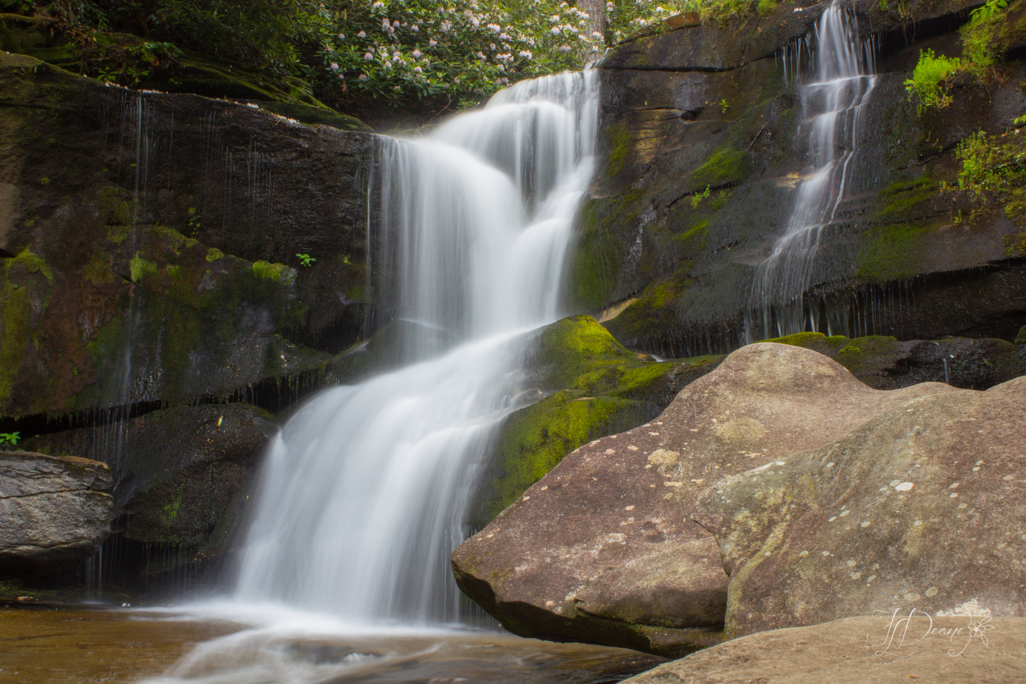 Cedar Rock Falls NC  Pisgah National Forest  Blue Ridge
