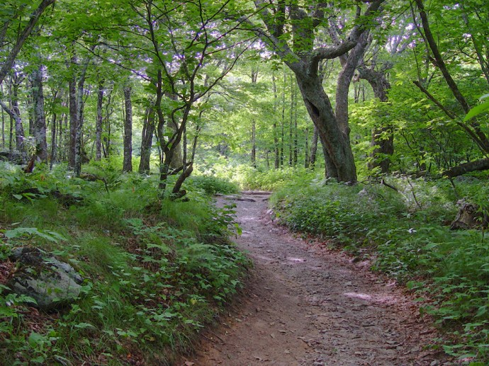 Blue Ridge Parkway Trails - Craggy Gardens