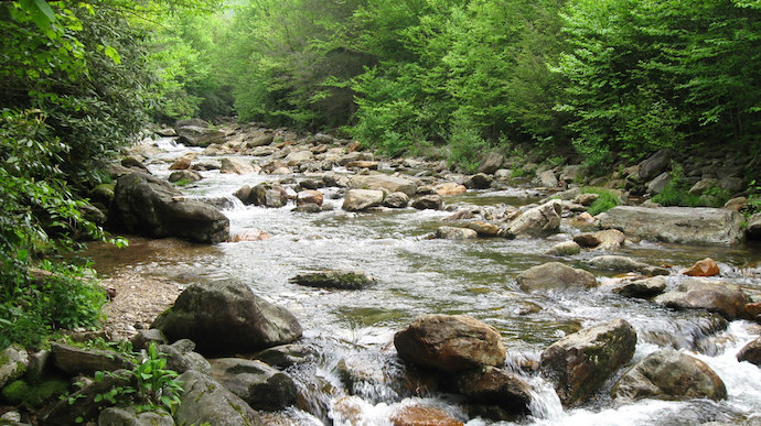 Pisgah National Forest - French Broad Tributary