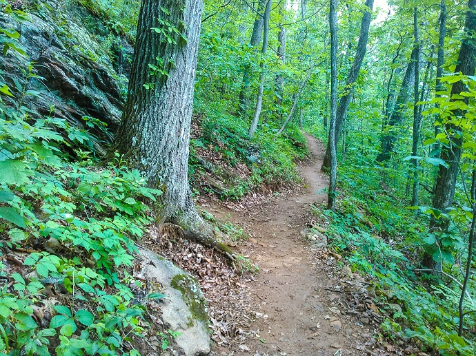 A section of the Mountains to Sea Trail near Asheville, NC