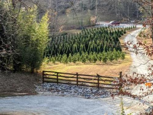 Barn Hill Tree Farm
