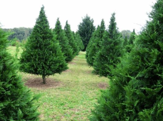 Cooper's Tree Farm