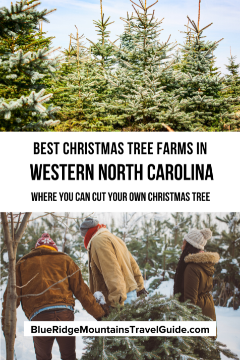 The Best Western NC Christmas Tree Farms in Boone, Asheville, and Beyond! The Best Western NC Christmas Tree Farms in Boone, Asheville, & Beyond | christmas tree farm nc | n.c. christmas tree farms | north carolina christmas tree farms | christmas tree farm north carolina | christmas tree farms nc | christmas tree farms in north carolina | christmas tree farm in boone nc | christmas tree farms boone nc | boone nc christmas tree farms | cut your own christmas tree nc |
