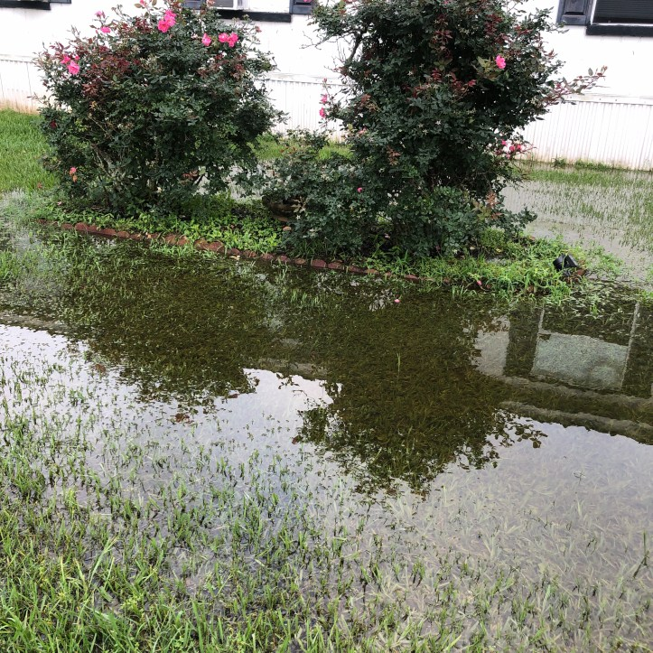 Front yard with large puddle