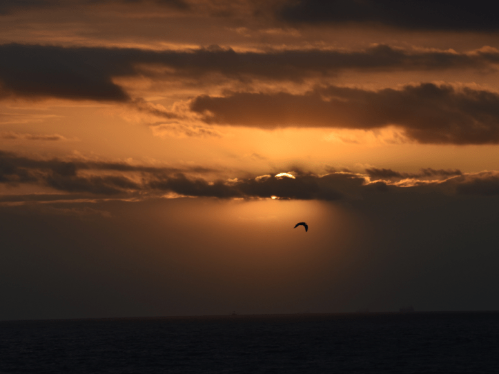 cloudy sky with silhouette of bird