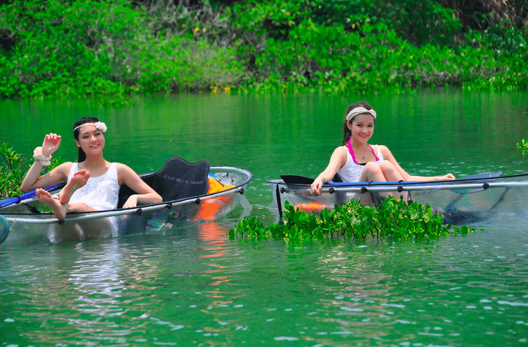 Full Day Eco Tour (Transparent Kayak) (6 hours)