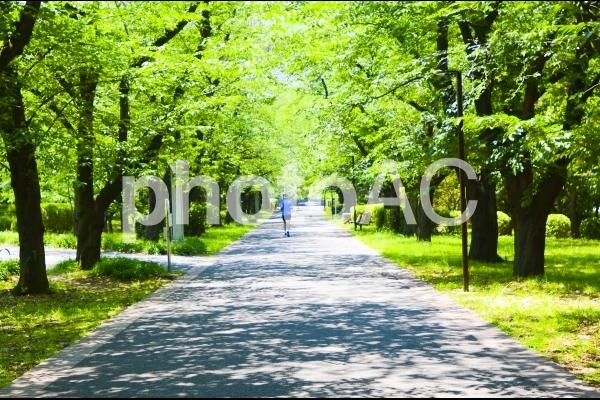 緑の中を走る人