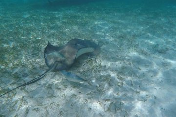 Snorkeling in Caye Caulker Belize, Blue Sky and Wine