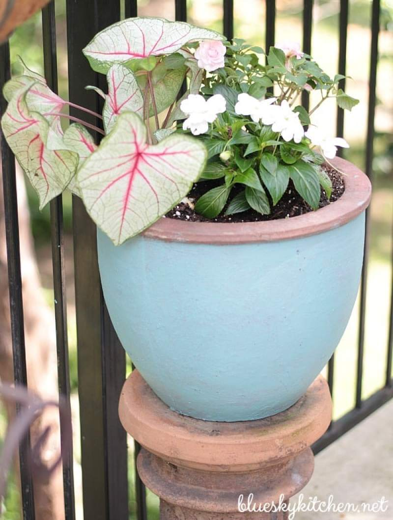 Why Painting Terra Cotta Pots and Pretty Plants Should Go Together. An easy tutorial using chalk paint to take terra cotta pots from plain to pretty.