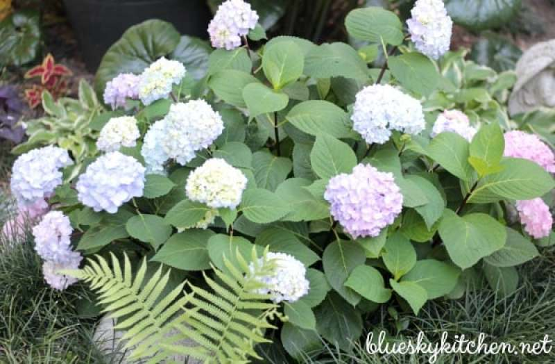 How to grow a beautiful garden in a small space. See how a flower garden that is limited to hayracks, pots and small spaces can be beautiful.