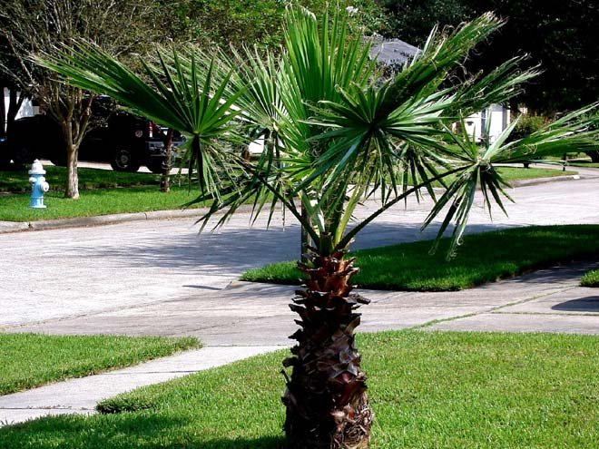Trees  For North Texas deciduous and evergreen shade or oranmentalBlue Sky Landscape