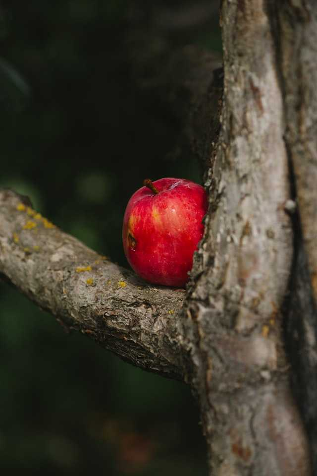 The Apple Trees by Doug Weller - a Financial Independence Fairy Tale