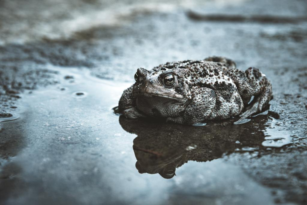 Mrs Grey and the Uncommon Toad - Financial Freedom fairy stories
