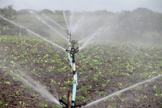 Closeup of crops with sprinkler irrigation; highlighting water scarcity and the benefits of hydroponics
