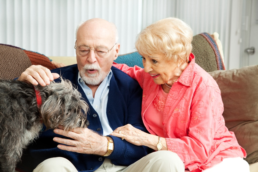 Best Dog Breeds for Seniors