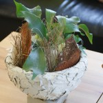 pflanzen_und_gefaesse_schale_weiss_pflanze_gruen_braun