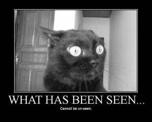 lolcat_whathavebeseen