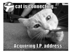 lolcats-ADSL-cat-is-connecting-Acquiring-IP-address