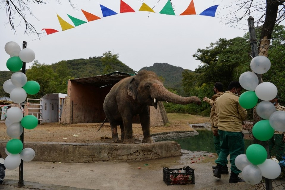 Friends threw a farewell party for Kaavan, Pakistan's only Asian elephant, before it heads to Cambodia - Farooq NAEEM / ©AFP