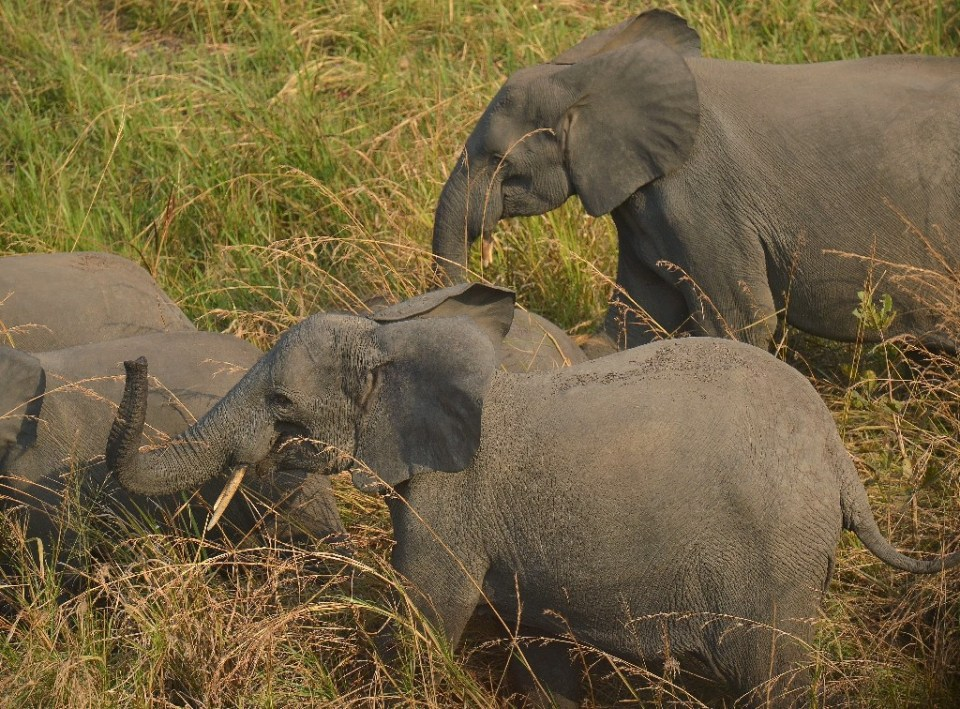 The Virunga National Park hopes to extend an electric fence to prevent elephants straying into farmland - TONY KARUMBA / ©AFP