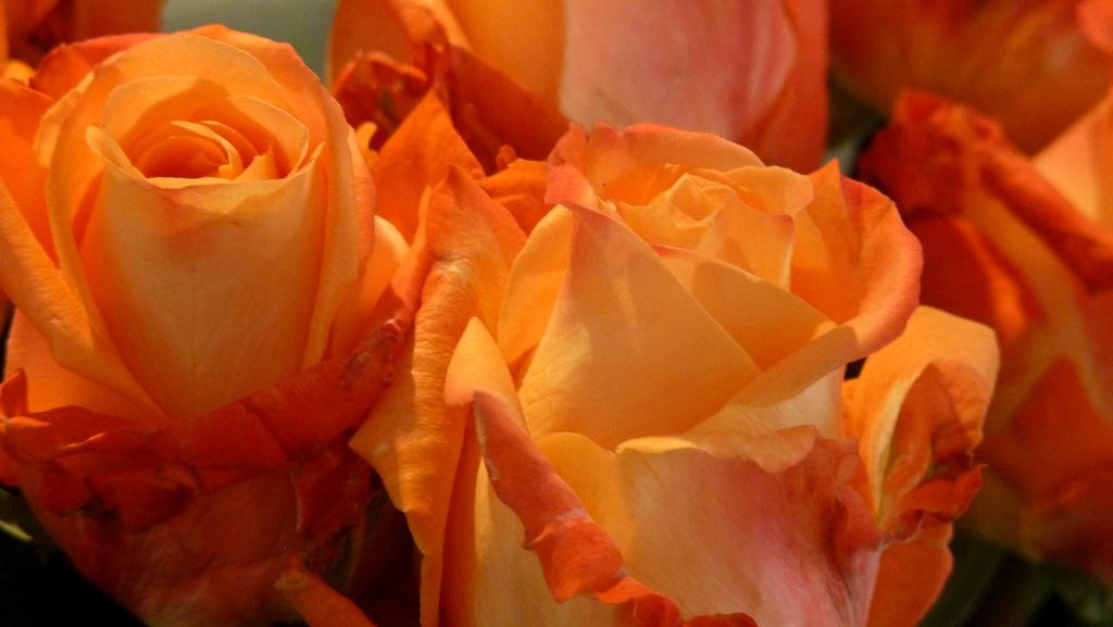Rose Carioca