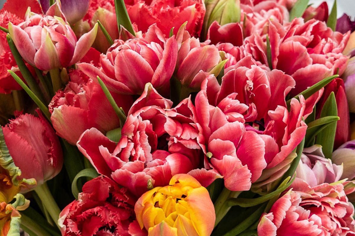 Tulpenmix im Frühjahr